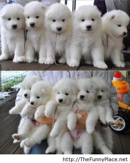 Baby polar bears, no just dogs!