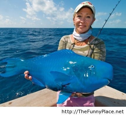 Blue fish picture