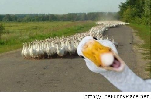 Funny cover photo with a duck