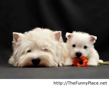 Funny cute dogs pic