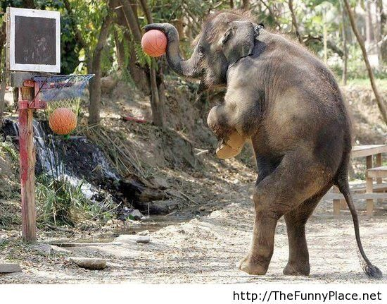 Funny elephant playing