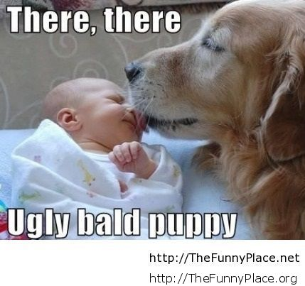 Funny kid and dog picture