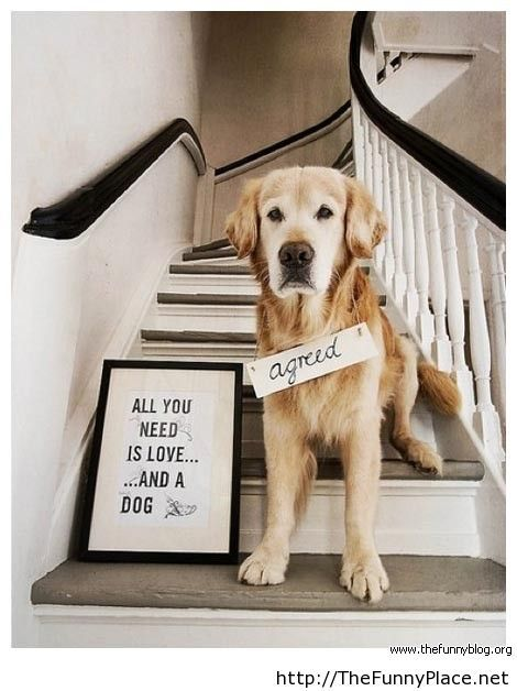 Funny love dog message