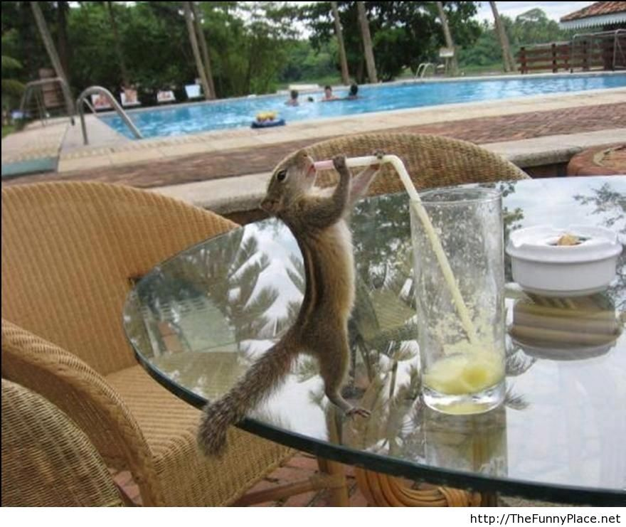 I-love-limonade