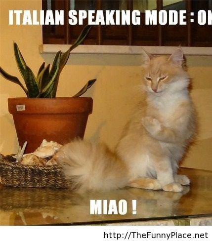 Italian speaking humor