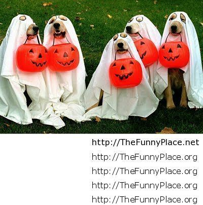 tagged dogs fun dogs fun halloween funniest dogs funniest halloween funny dog costume funny dogs funny halloween halloween halloween 2013 - Funniest Halloween Pictures