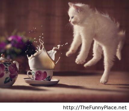 Just a kitten startled by milk