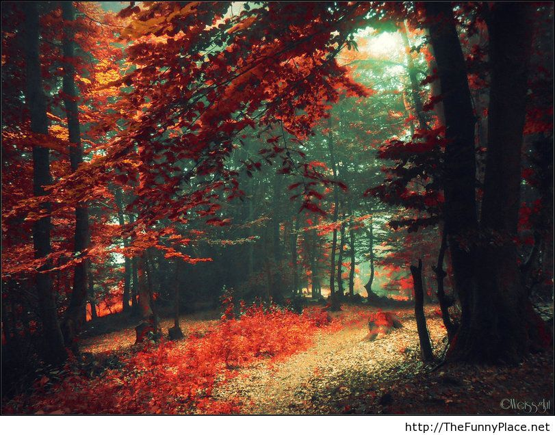 October autumn wallpaper 2013