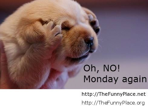 Oh, Tomorrow is monday!