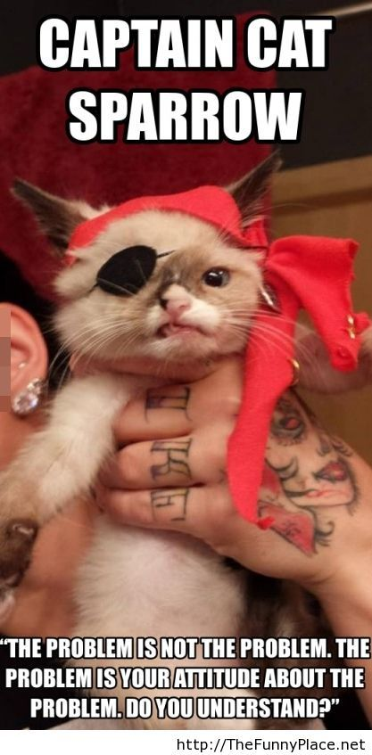 This is Captain Cat Sparrow