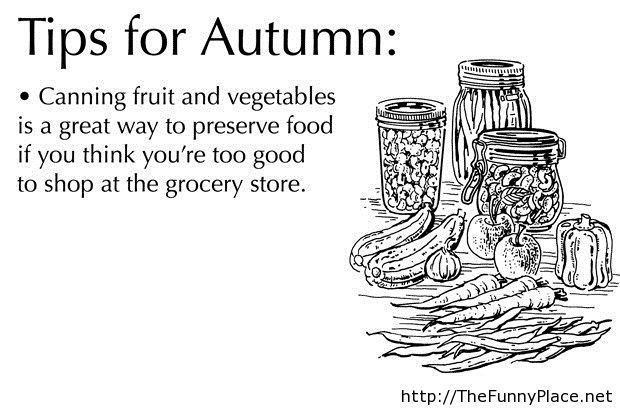 Tips for autumn 2013