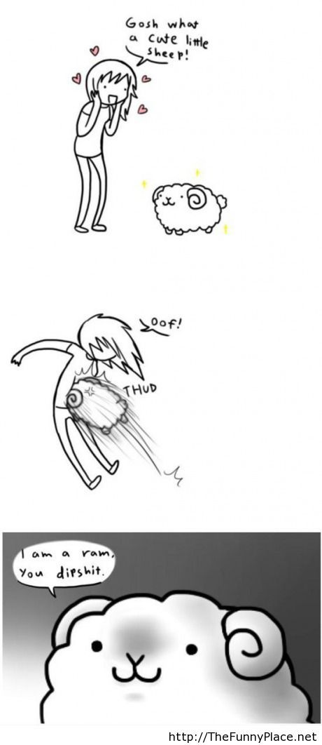 What a cute sheep!