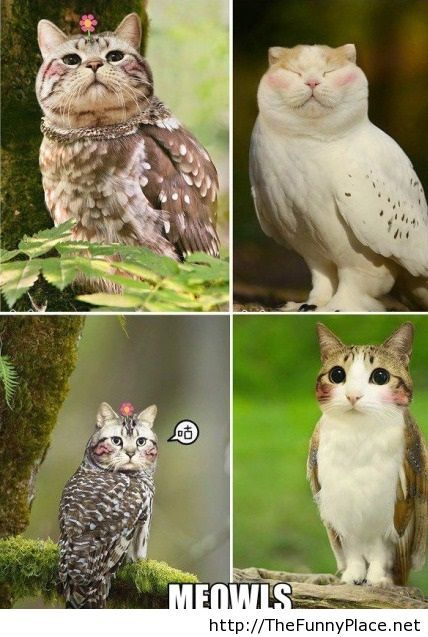 What do you get when you combine a cat with a owl