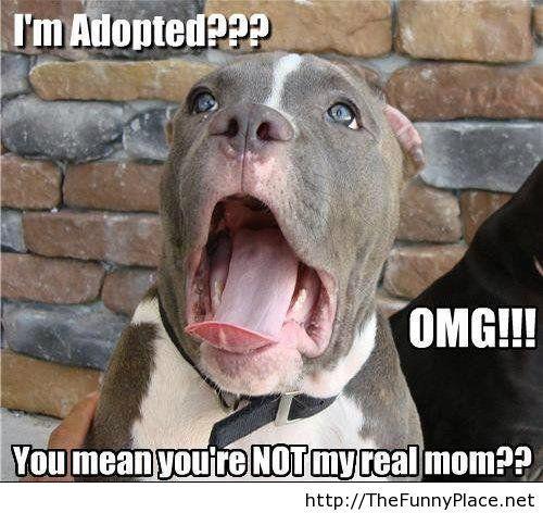 adopted-animal-fail