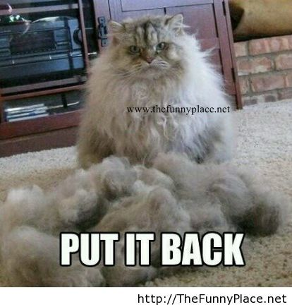 Angry cat funny picture