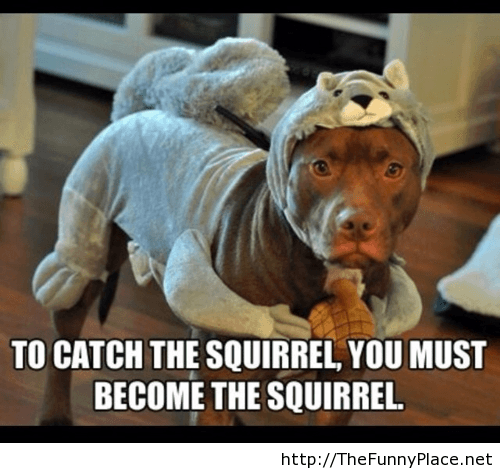 Become the squirrel