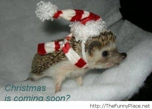 Chrismas is coming soon