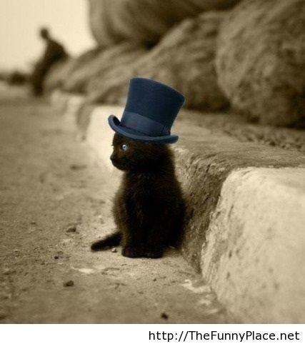 Classy kitten