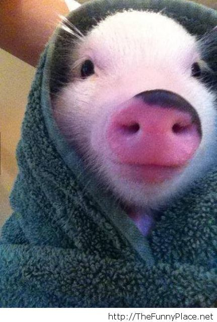 Cute and awesome pig image