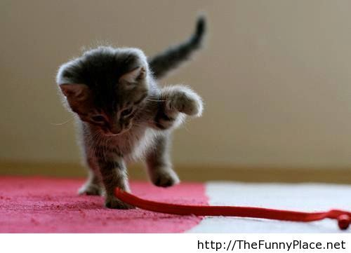 Cute kitty picture