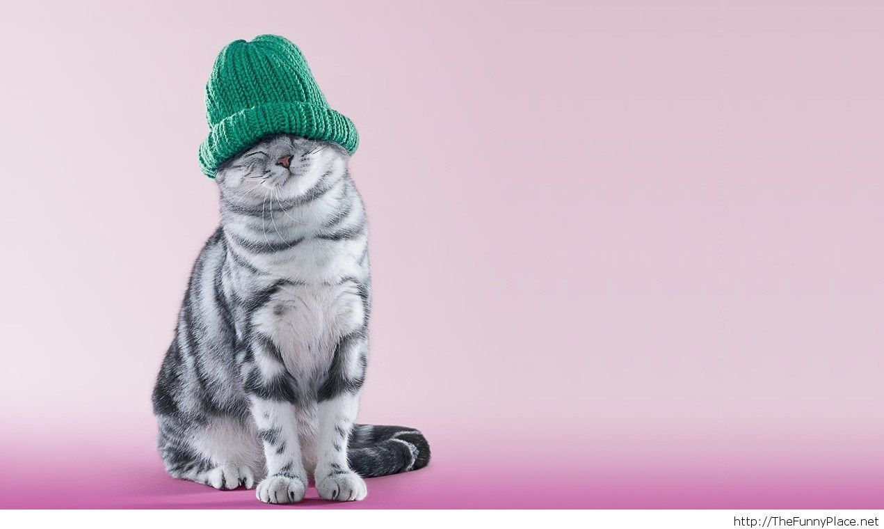 Cute winter animal picture