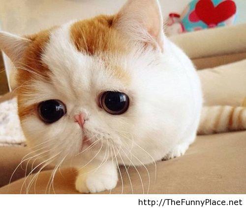 Cutest-cat-in-the-world.jpg