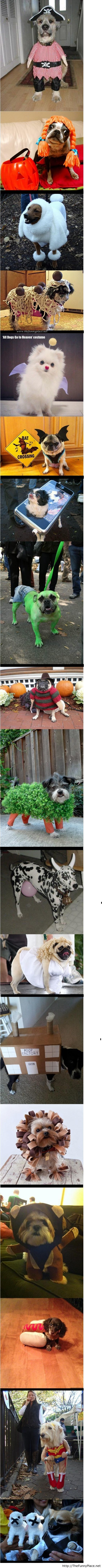 Dogs Getting Ready For Halloween 2013