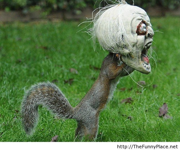 Everybody like Halloween funny picture with a squirrel