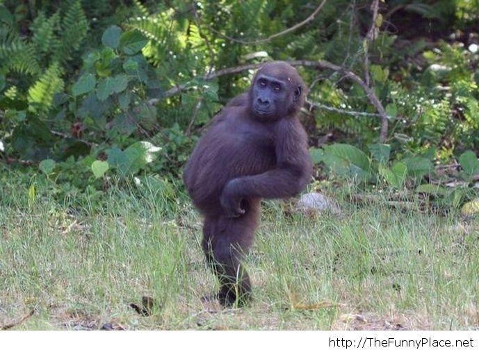 Fat monkey is fat