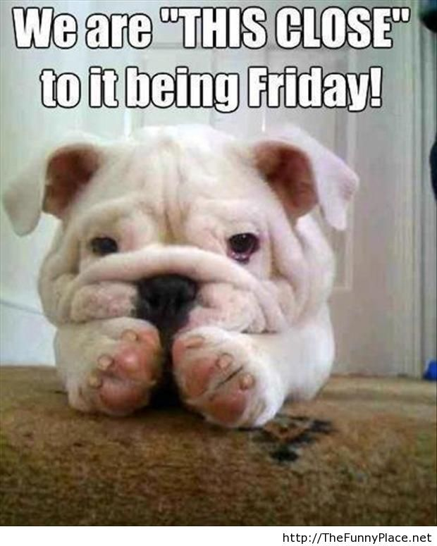 Friday tomorrow funny quote