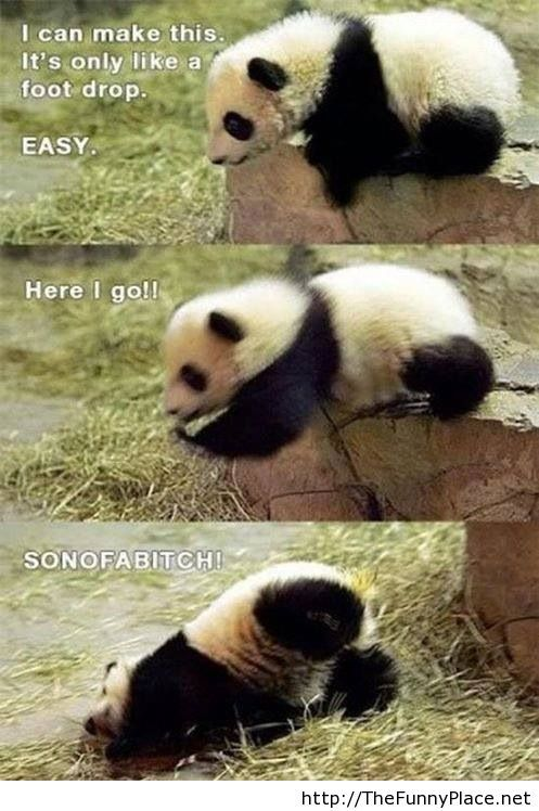 Funniest Panda in the world!
