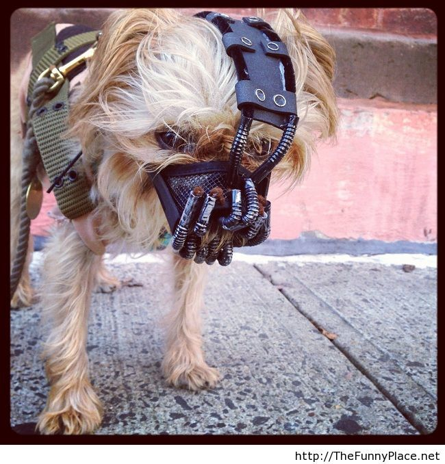 Funny Halloween dog costume