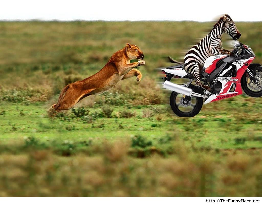 Funny animals HD wallpaper for 2013 2014