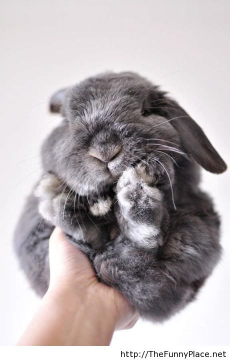 Funny bunny picture