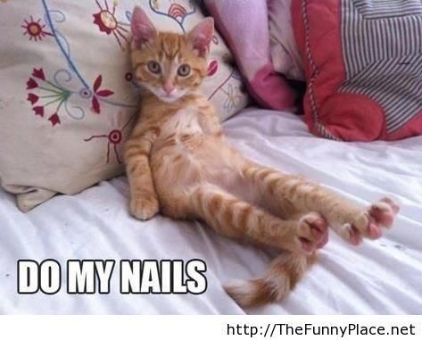 Funny cat sitting