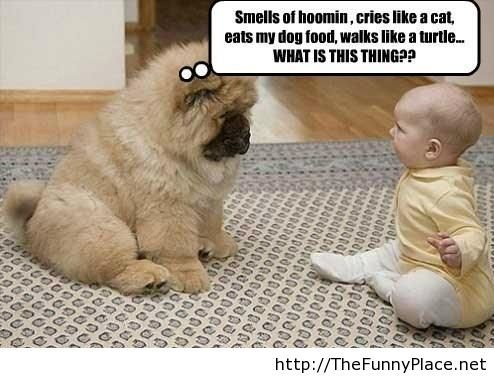 Funny chow chow talking with a kid