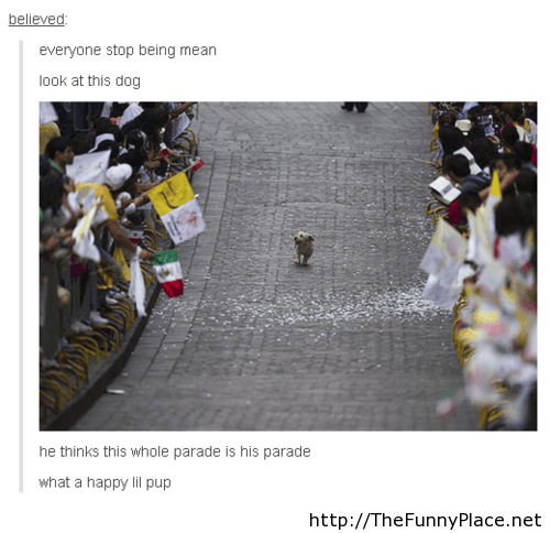 Funny dog in a parade