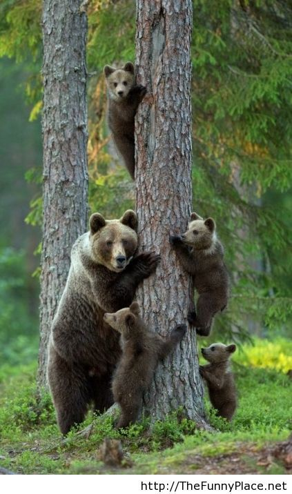 Funny family of bears
