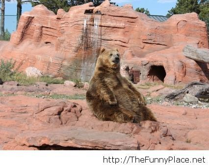 Funny fat bear picture