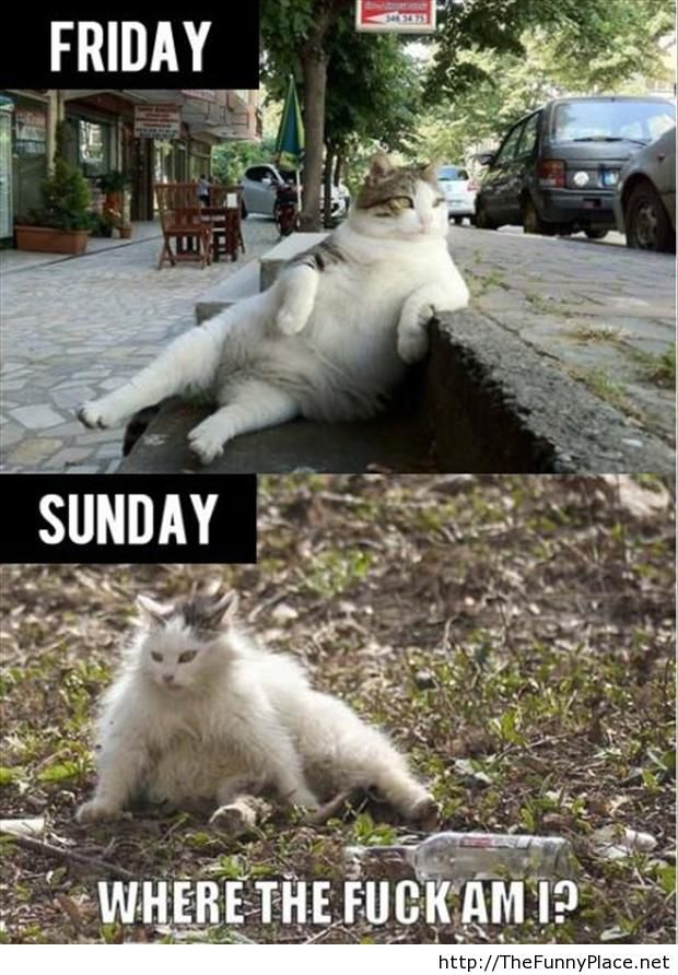 Funny friday and monday pictures