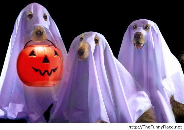 Funny halloween image 2013