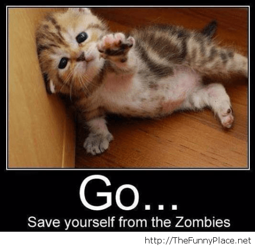 Funny zombie messages with a kitty