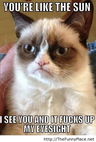 Grumpy Cat Funny TheFunnyPlace