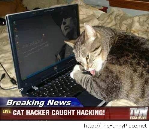 Hacker cat is real