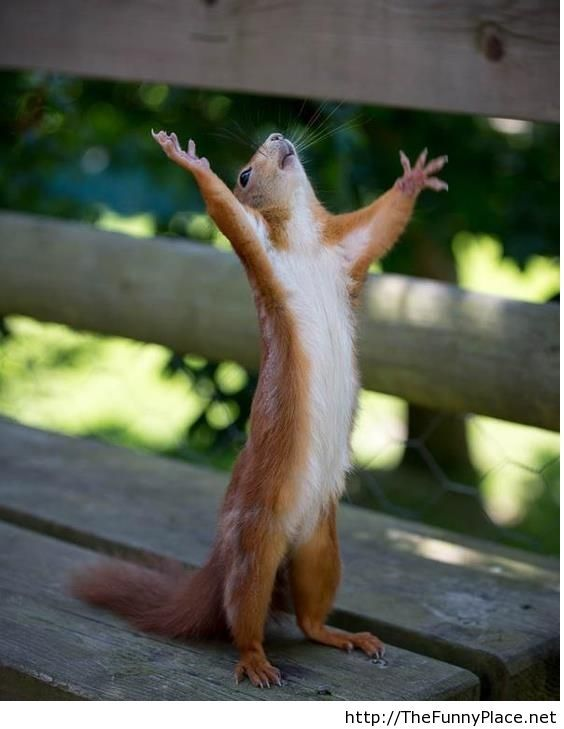 Hallelujah tomorrow is friday