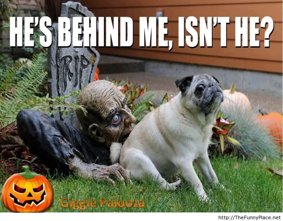 Halloween funny image with saying