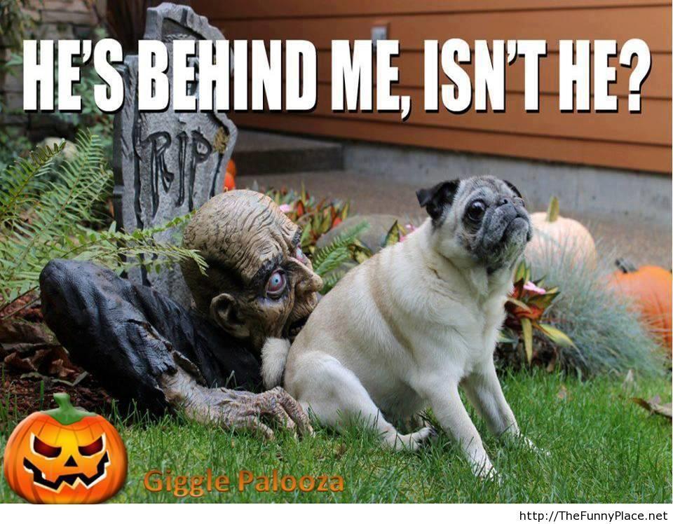 Halloween funny image with saying
