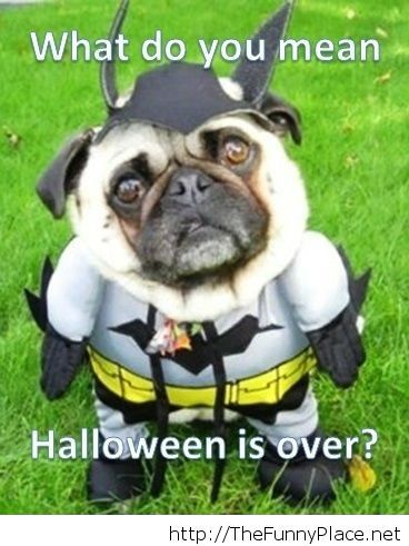 Halloween is over funny picture