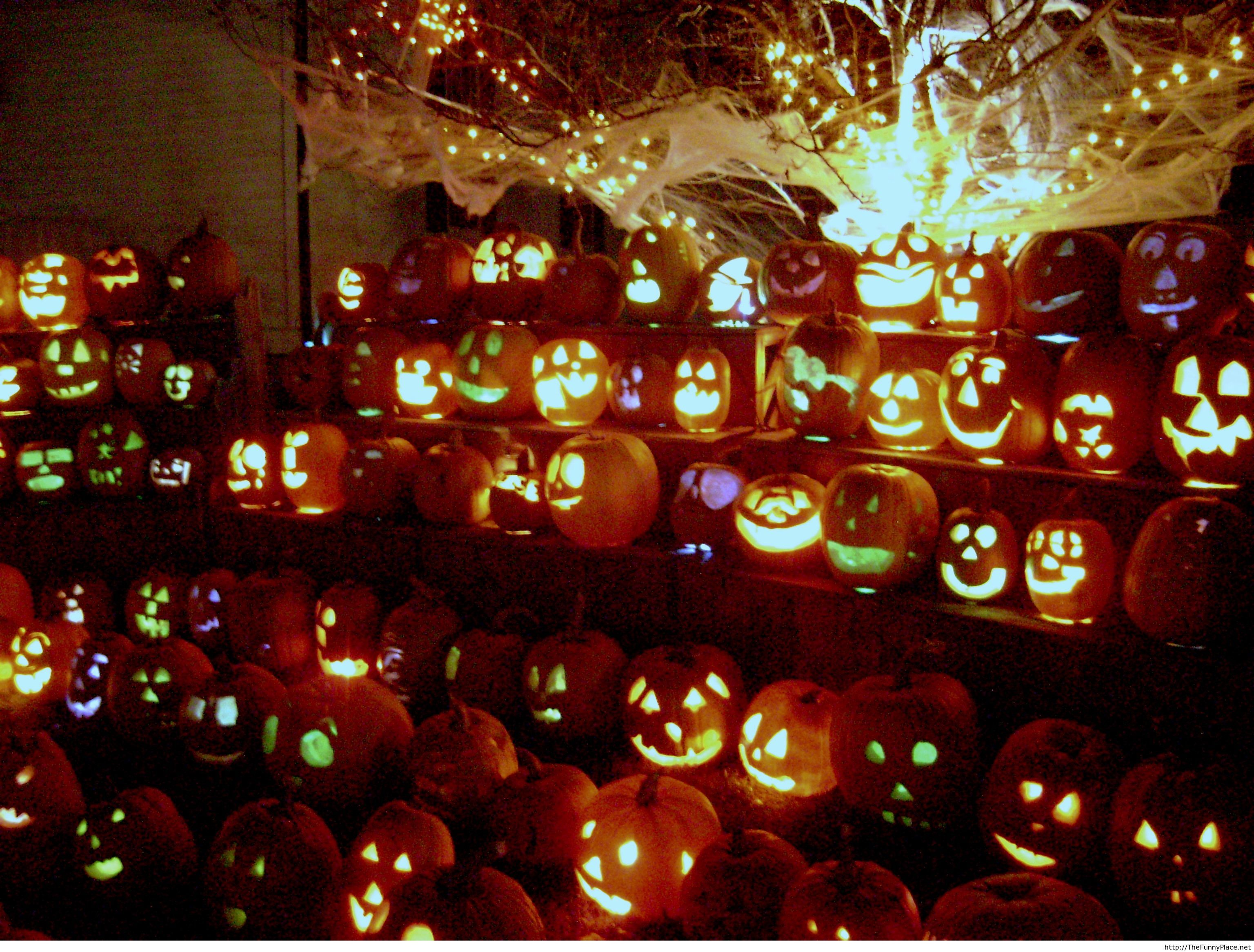 Halloween pumpkins lined up so funny