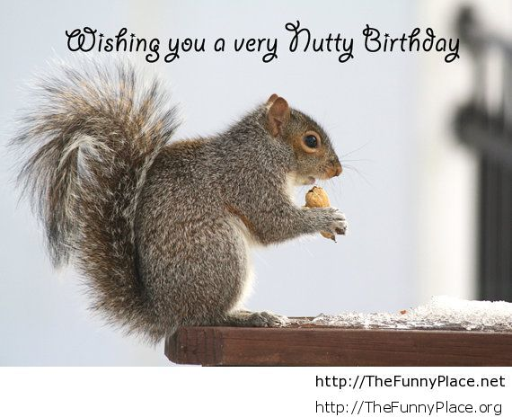 Happy birthday funny image an saying
